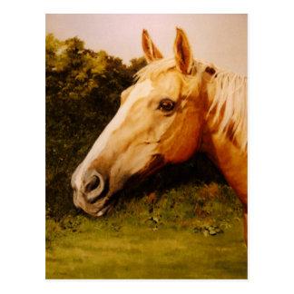 Palomino Horse with White Blaze Postcard