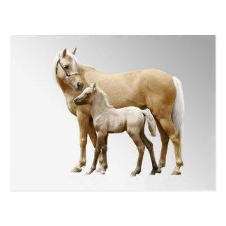 Palomino Mare & Foal Postcard