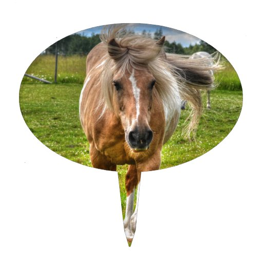 Palomino Paint Horse-lovers Gift Collection Cake Topper
