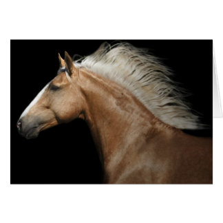 Palomino Stallion Card