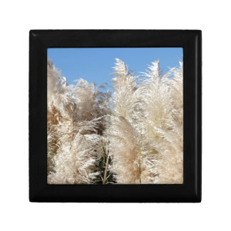 Pampas Grass with a Sunny Blue Sky Gift Box
