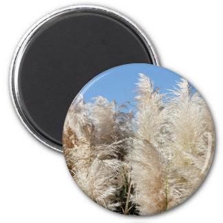 Pampas Grass with a Sunny Blue Sky Magnet