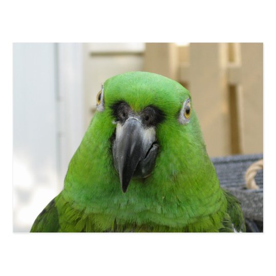 Panama Amazon Green Parrot postcard