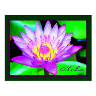 Panama Pacific Water Lily, Maui Hawaii Postcard
