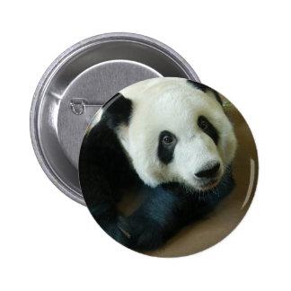 panda118 button