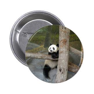 panda122 buttons