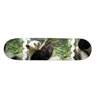 Panda and Bamboo Skateboard