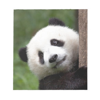 Panda Bear Cub Notepads