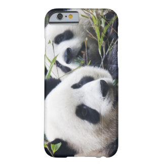 Panda Bear Hugs Barely There iPhone 6 Case