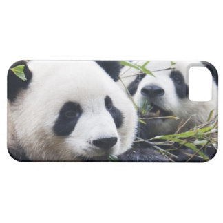 Panda Bear Hugs iPhone 5 Cover