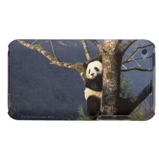 Panda bear in tree , China iPod Case-Mate Case
