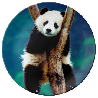 Panda bear home decor pets products for Panda bear decor