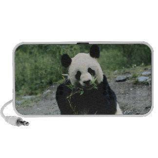 Panda Bear Travelling Speakers