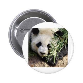 Panda Bear @ Zoo Atlanta 6 Cm Round Badge