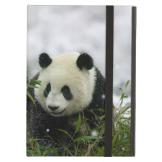 Panda Bears Powis iCase iPad Cases