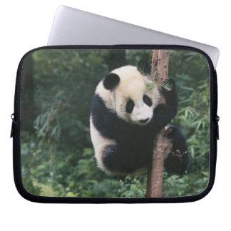 Panda cub climbing the tree, Wolong, Sichuan, Laptop Sleeve