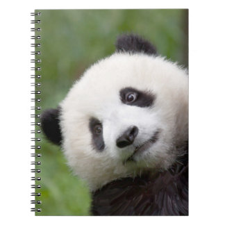 Panda cub painting notebooks