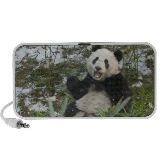 Panda eating bamboo on snow, Wolong, Sichuan, 2 iPod Speakers