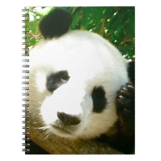 Panda Face Notebooks