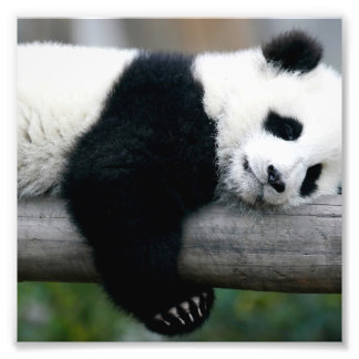 Panda Hugging Post Photographic Print