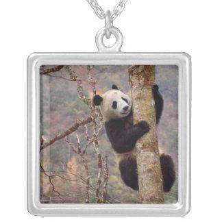 Panda on tree, Wolong, Sichuan, China Square Pendant Necklace