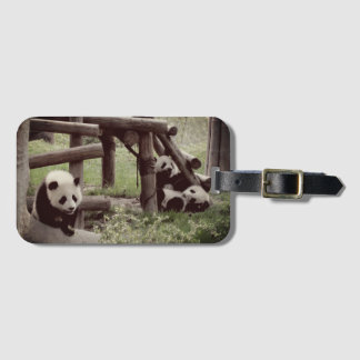 Panda Photo - Retro Style Luggage Tag