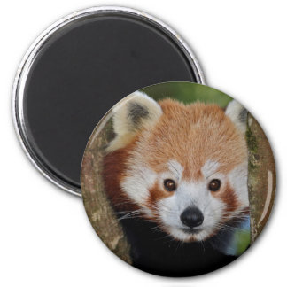 Panda Portrait Magnet