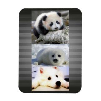 Panda-Seal-Mini American Eskimo Rectangular Photo Magnet