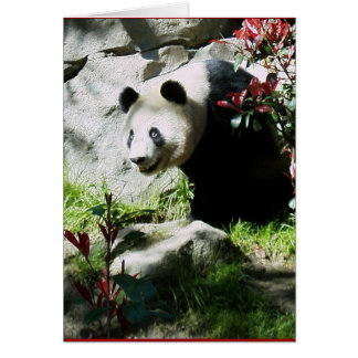 Panda Smile Birthday Card