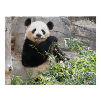 Panda Snack Poster