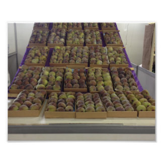 Panel of figs photographic print