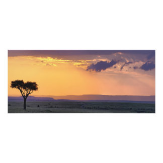 Panoramic view of single acacia tree at art photo