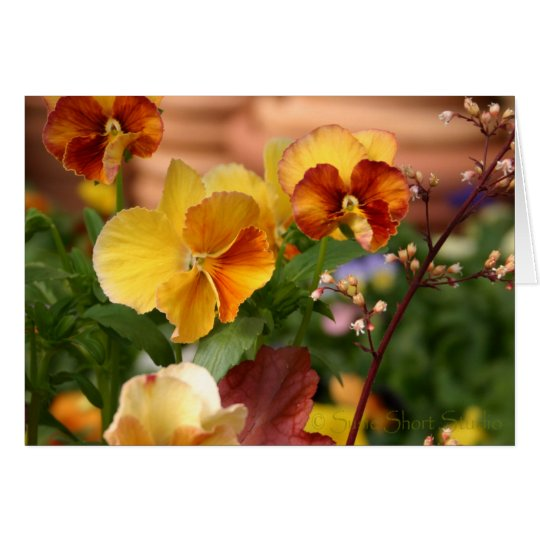 Pansy A-023 Card