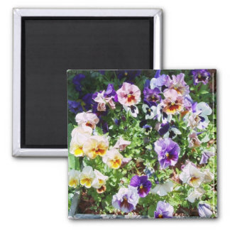 pansy bed magnet