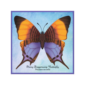 Pansy Daggerwing Butterfly Canvas Print