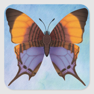 Pansy Daggerwing Butterfly Square Sticker