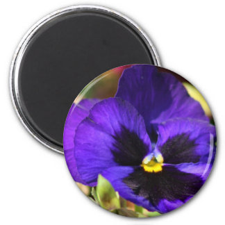 Pansy Flower Magnet