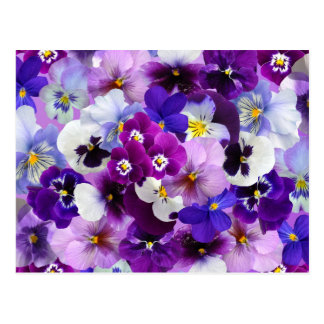 Pansy Flower Wallpaper Art Postcard