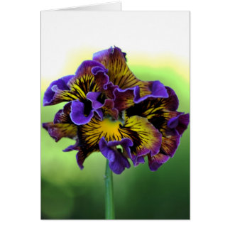 Pansy Flower - With Love Card
