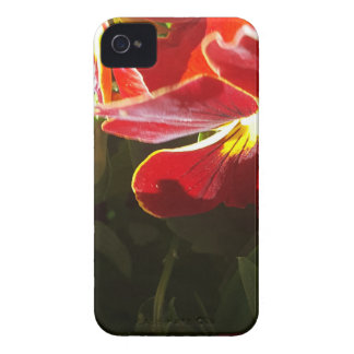 Pansy flowers iPhone 4 case