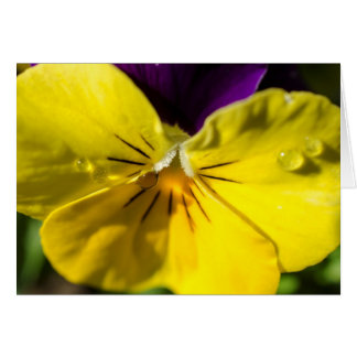 Pansy Greeting Card - Blank