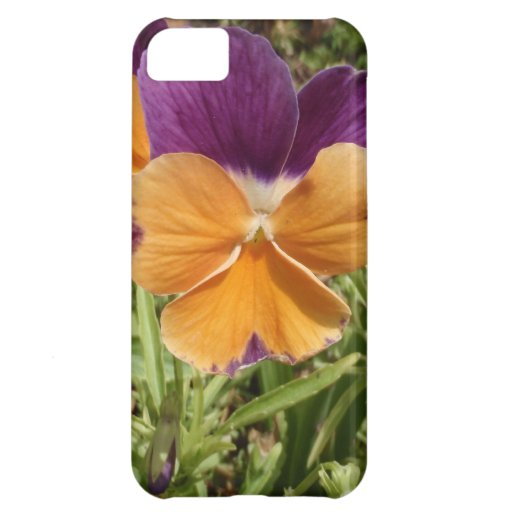Pansy Jolly Joker Case For iPhone 5C