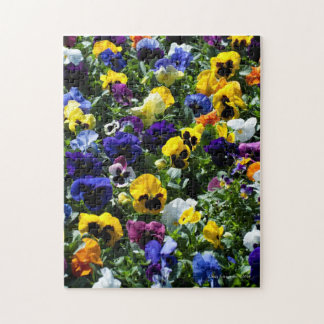 Pansy Lovers Puzzle