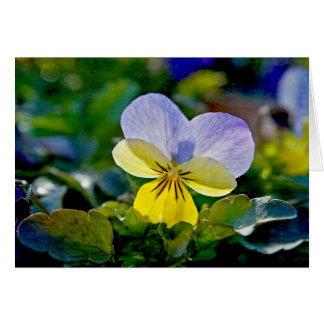 Pansy Perfection Note Card