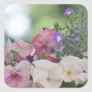 Pansy photo square sticker