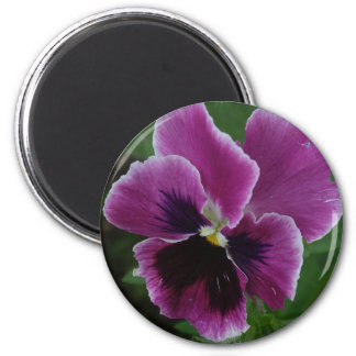 Pansy Pictures Round Magnet