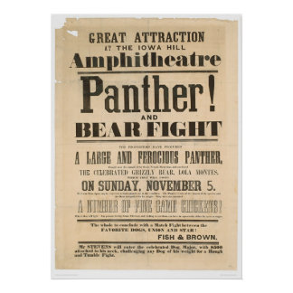 Panther and Bear Fight Advertisement (1293A) Poster