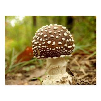 Panther Cap Mushroom Postcard