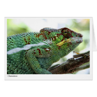 Panther chameleon Gift Card