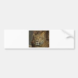Panther Stalking Bumper Sticker